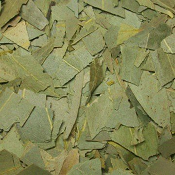 infusión eucalipto