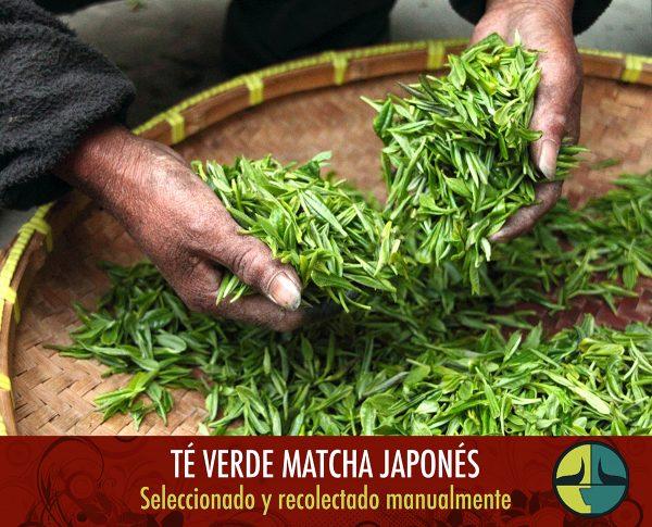 FOTO SELECCION The Flavour Shop. Tu tienda online de té, café, rooibos e infusiones Saboreaté y Café