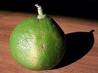 https  upload.wikimedia.org wikipedia commons thumb 7 77 Bergamotfruit.jpg 200px Bergamotfruit The Flavour Shop. Tu tienda online de té, café, rooibos e infusiones Saboreaté y Café