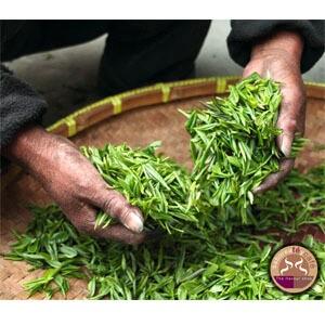 Té Verde Japonés Genmaicha Matcha 1 kg